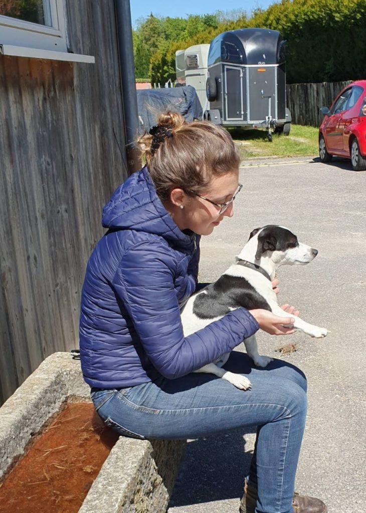 Séance d'ostéopathie canine boiterie